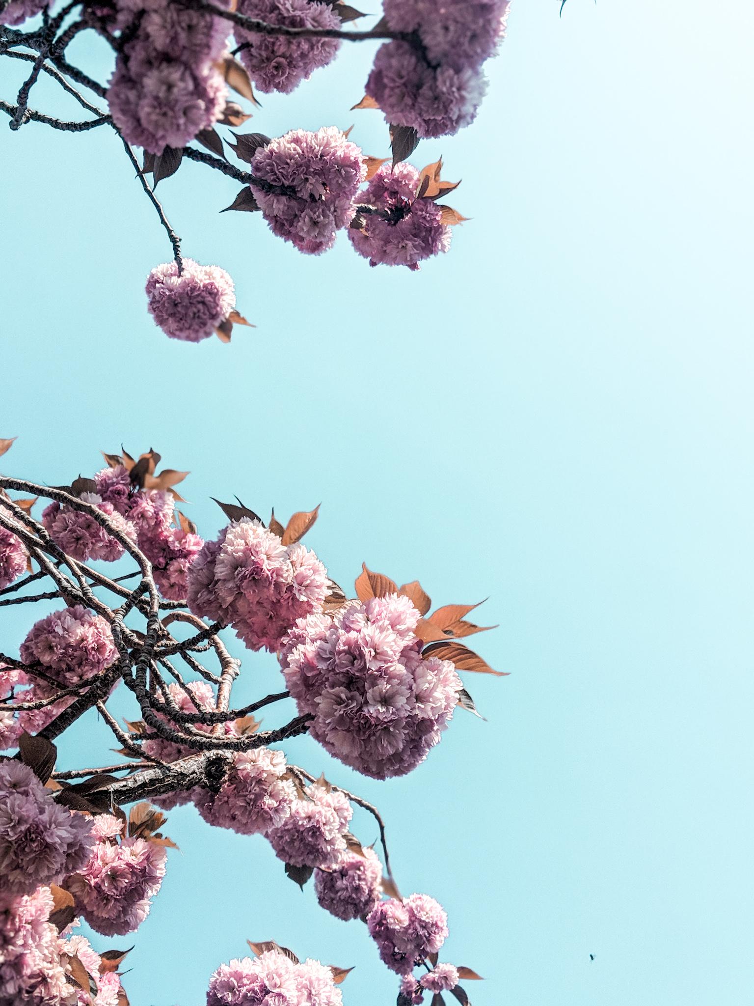 blossom spotting
